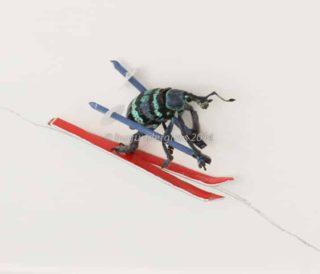 beetle skiing
