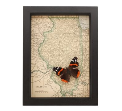 Framed Map of Illinois Butterfly