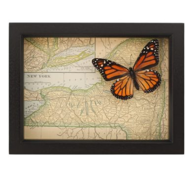 Framed Map of New York Butterfly