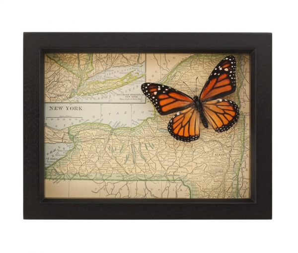 new york state butterfly