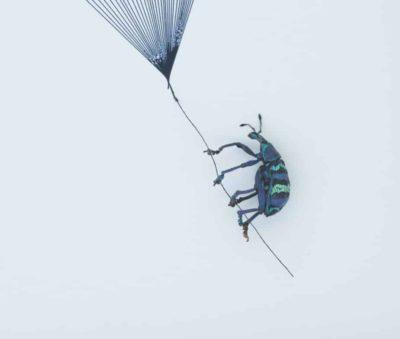 banksy beetle