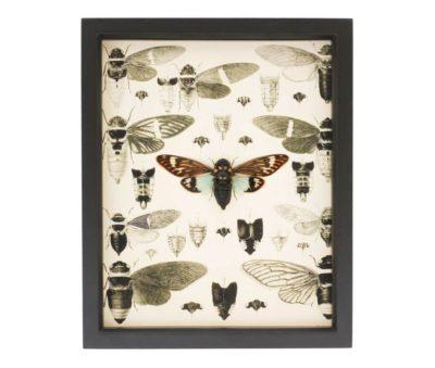mounted cicada display