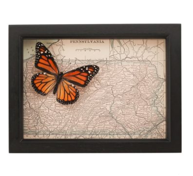 Framed Map of Pennsylvania with Butterfly