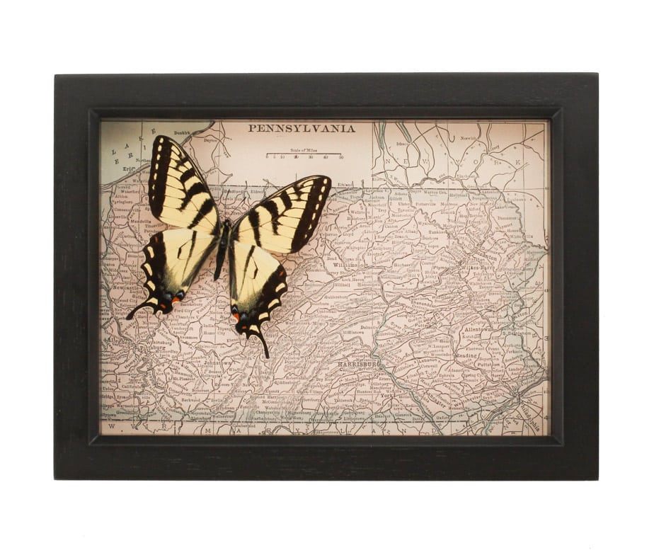 old pennsylvania map with butterfly