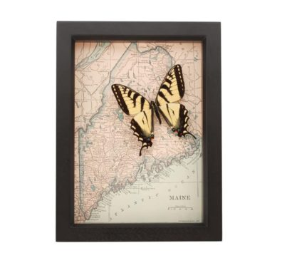 Framed Maine Map with butterfly