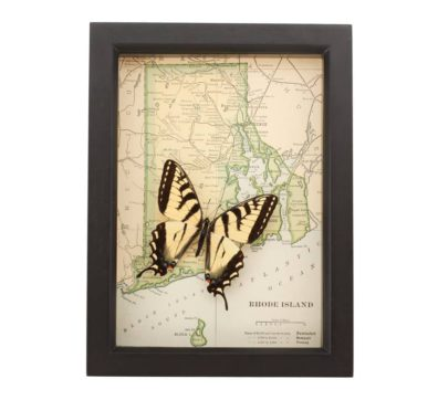 Framed Rhode Island Map with butterfly