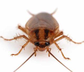 cockroach macro photo
