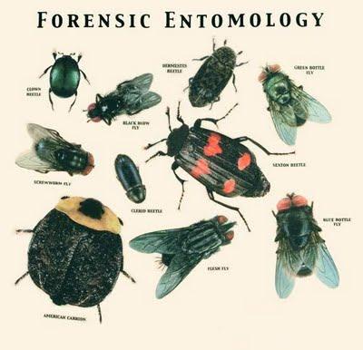 Forensic Entomology - Bugs Solving a Crime