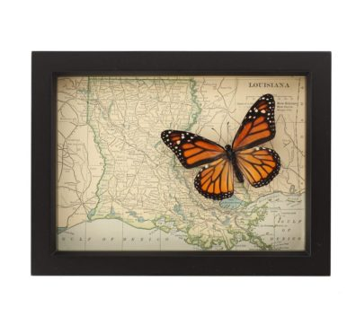 Framed Map of Louisiana with Butterfly
