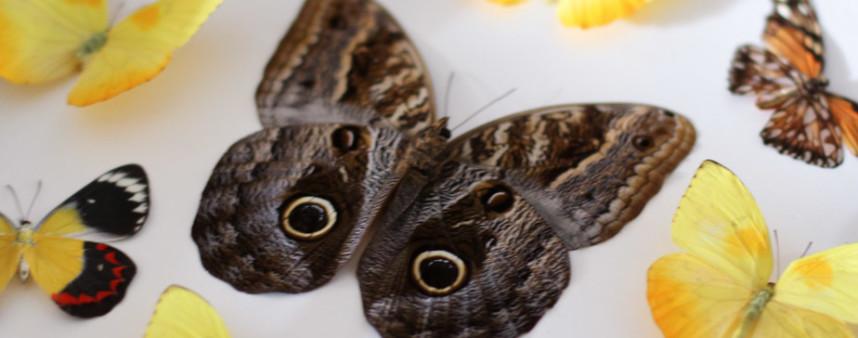 framed butterflies circle