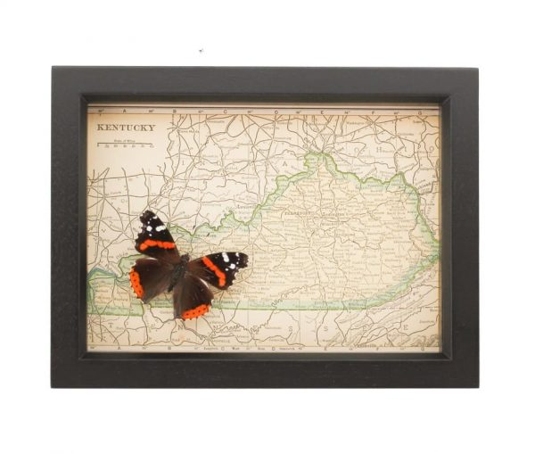 vintage map of Kentucky butterfly