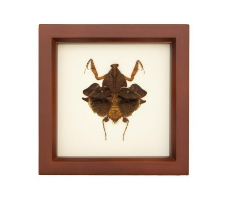 framed praying mantid
