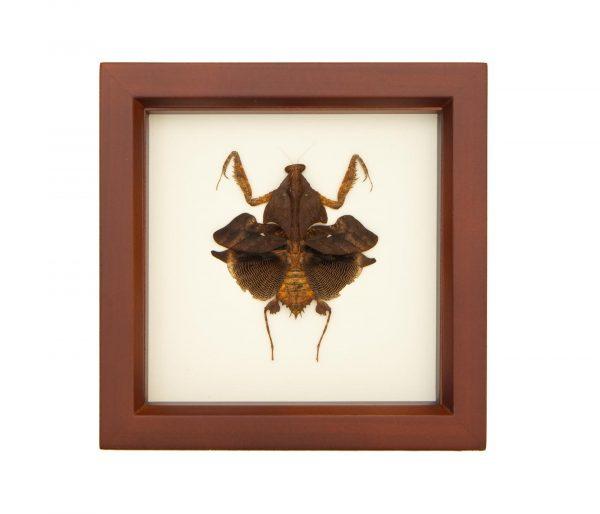 framed praying mantid
