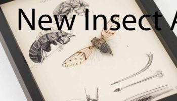 insect-art