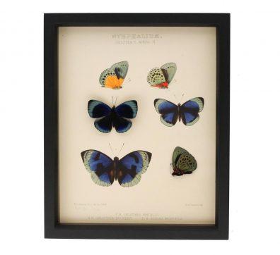 Charles Darwin Butterfly Natural History