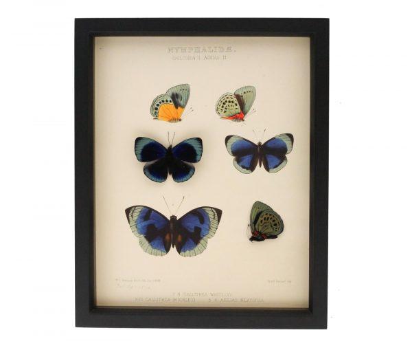 framed entomology display