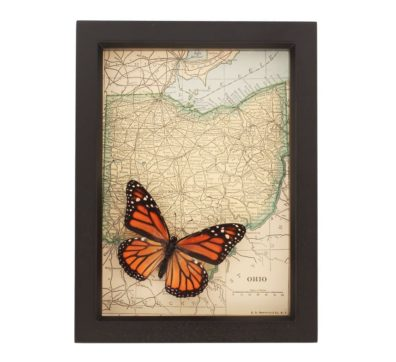 Framed Map of Ohio with Butterfly