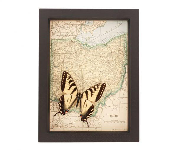 wall decor butterfly art