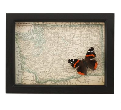 Framed Map of Washington with Butterfly