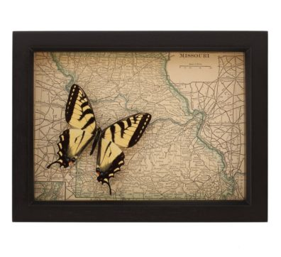 Framed Map of Missouri Butterfly