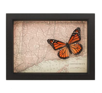 Framed Map of Connecticut with Butterfly