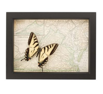 Framed Map of Virginia with Butterfly
