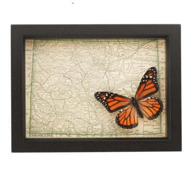 Framed Colorado Map Butterfly