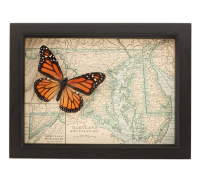 Framed Map Maryland Butterfly