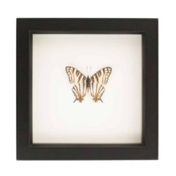 framed map butterfly
