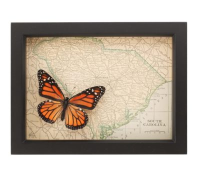 Framed Map of South Carolina with Butterfly