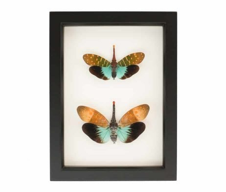 exotic insect collection