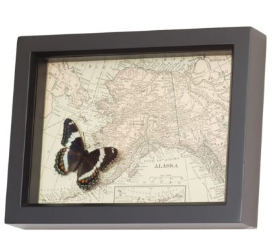 Framed Alaska Map with Butterfly