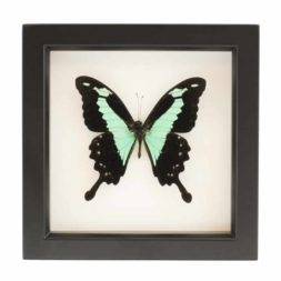 framed butterfly decor