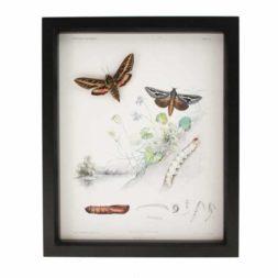 moth life cycle
