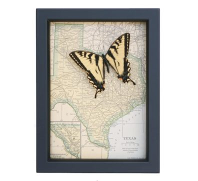 Framed Texas Map with butterfly