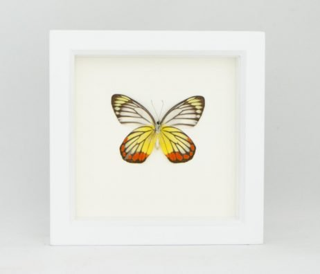 framed butterfly art piece