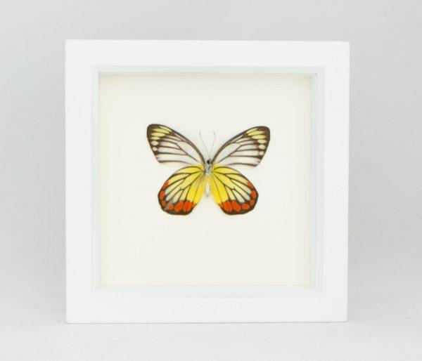 framed butterfly art piece