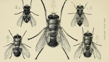 insects in the home