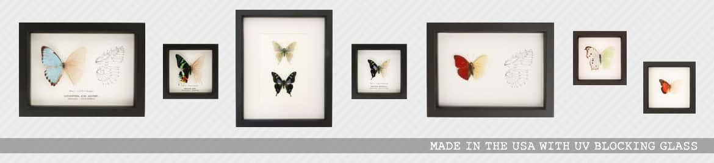 taxidermy oddities | Real Skeleton Butterflies™ | Butterfly Skeleton