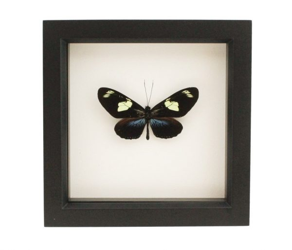 insects under glass