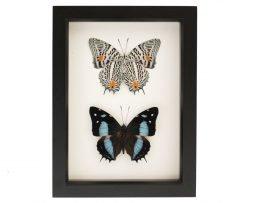 butterfly art on wall