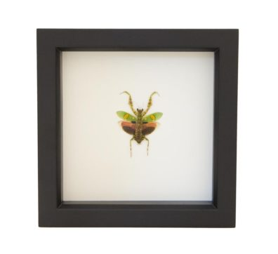 Framed Jeweled Flower Mantid