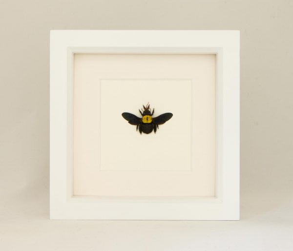 framed bee display