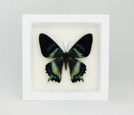 3d wall art moth