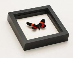 moth taxidermy