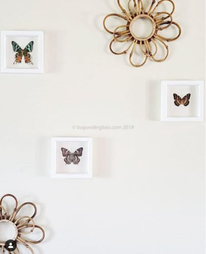 modern framed butterfly