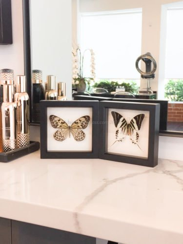 butterflies on counter