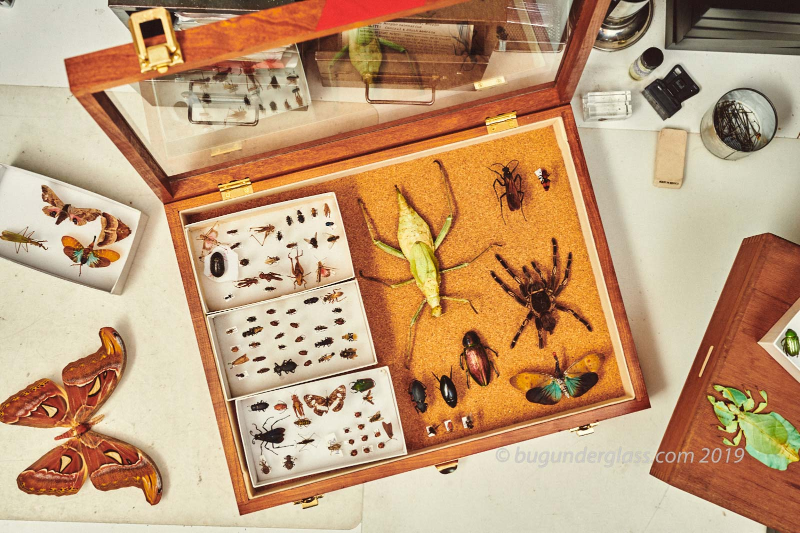 insect collection in box