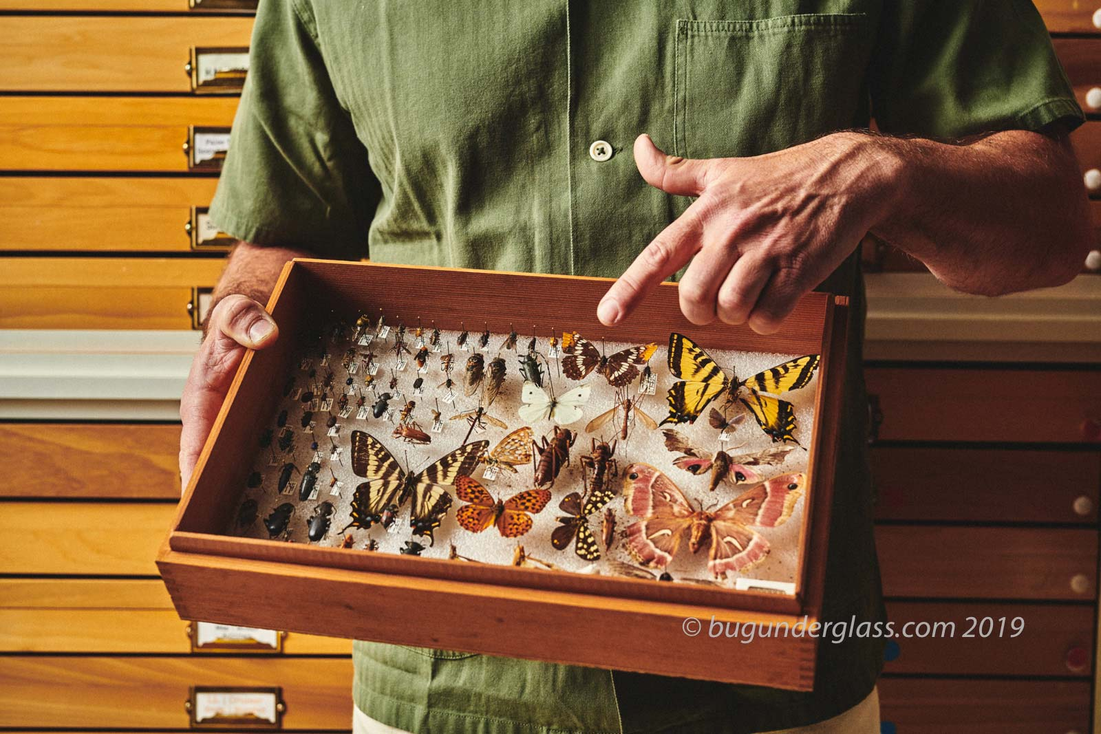 pointing to insect collection