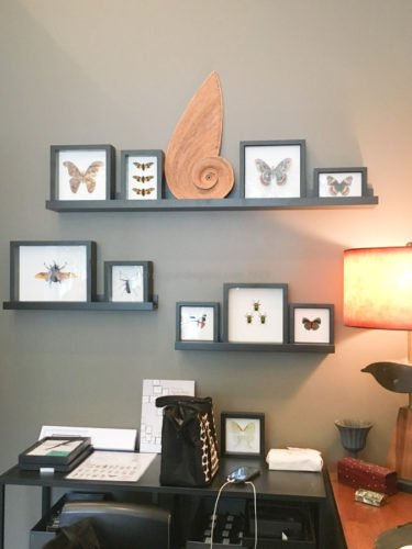retail store framed butterflies